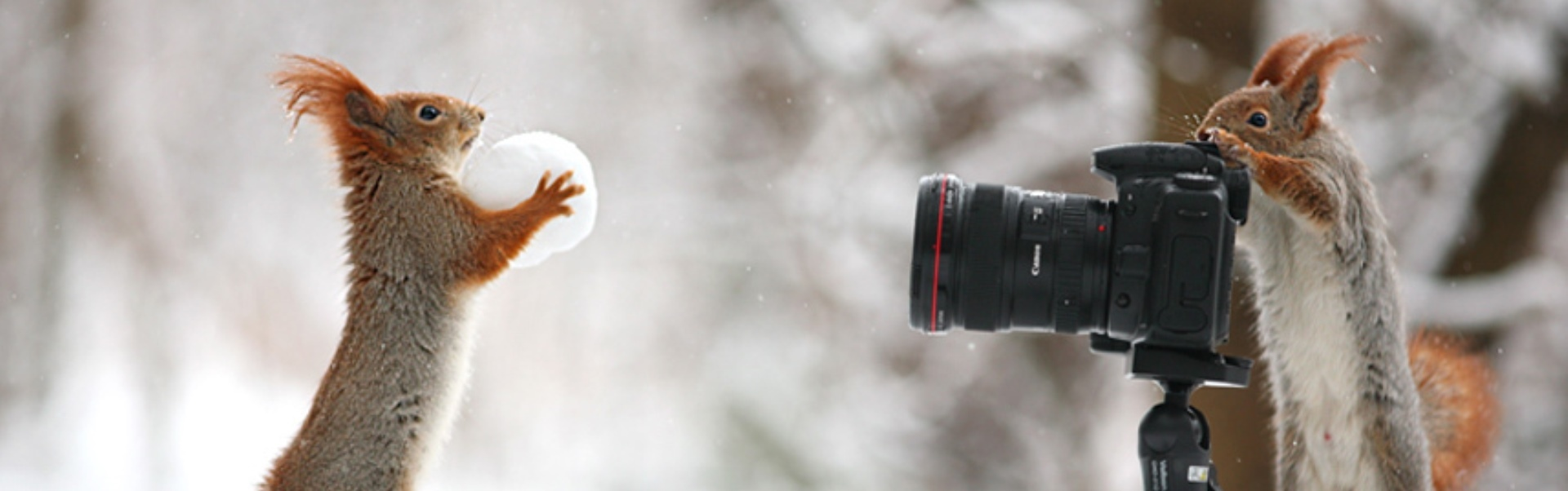 11 animale care se pricep la fotografie mai bine decât tine