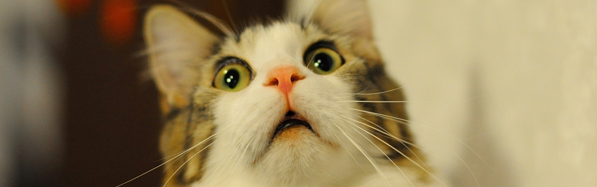 10 reacţii ale animalelor, atunci când vă iubiţi în faţa lor – Foto şi Video