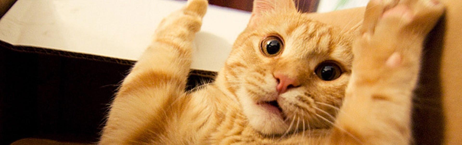 20 de momente amuzante cu pisici, surprinse exact la timp – Galerie Foto