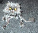 Cele mai amuzante 15 pisici, surprinse în ipostaze foarte ciudate - Galerie Foto
