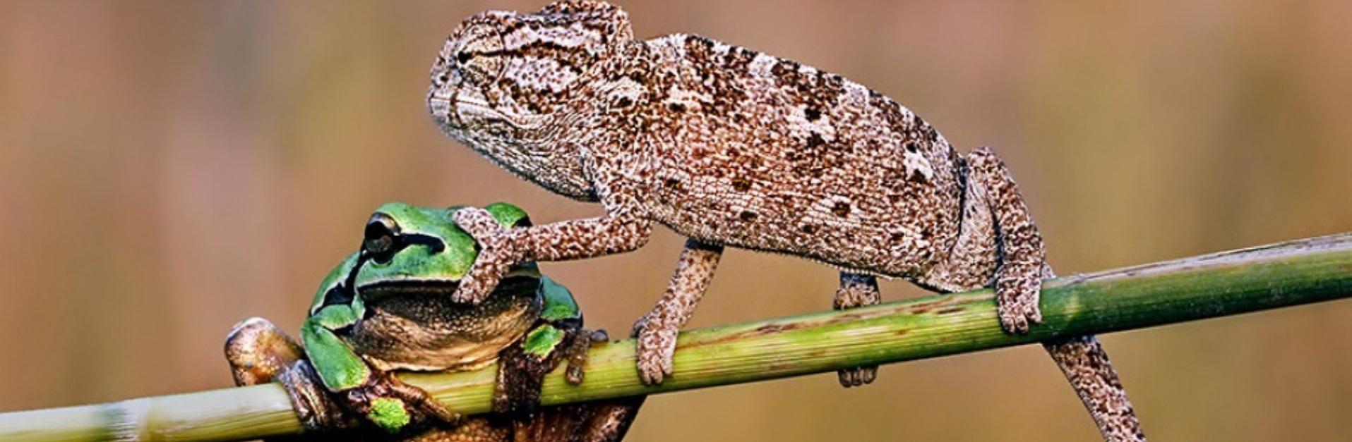10 fotografii perfecte cu animale. Nu veţi crede că nu sunt modificate în Photoshop - Galerie Foto