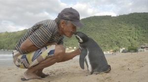 Poveste incredibilă: Un pinguin înoată anual 8000 de km, pentru a-l vedea pe omul care i-a salvat viaţa - Galerie Foto