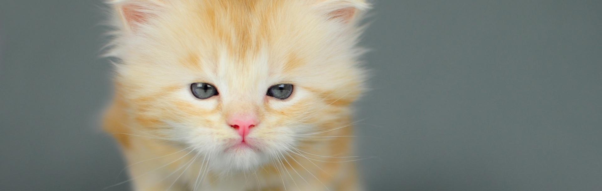 10 pisici care habar nu au despre ceea  ce vor de la viață – FOTO