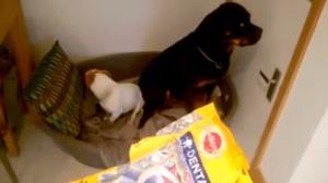 Stană de piatră: cea mai tare reacție a unor câini, când sunt întrebaţi cine a mâncat toată mâncarea – VIDEO