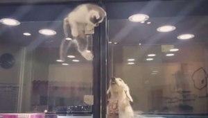 A EVADAT din cușca ei, pentru a sta cu prietenul ei singuratic – Clipul este ABSOLUT adorabil!!!
