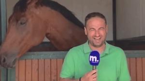 Calul mult prea prietenos nu lasă reporterul să își facă treaba. Priviți prin ce trece bărbatul – VIDEO