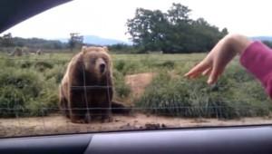 I-a făcut cu mâna unui urs dintr-o rezervație naturală. Reacția lui? A stârnit hohote de râs – VIDEO