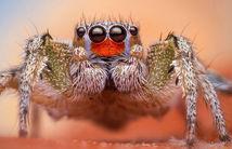 A ucis păianjenul, dar nu se aștepta să iasă ASTA din el! VIDEO