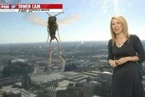 Intâlnire epică între o prezentatoare TV şi o... albină! VIDEO