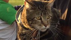 Dacă nu ar fi fost pisica lor, ei AR FI MURIT în casă. Cum le-a salvat viața - VIDEO