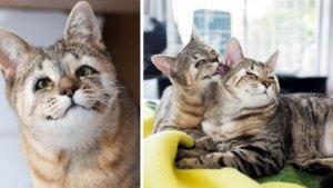Au găsit două pisici pe stradă, le-au luat acasă şi când le-au studiat cu atenţie au rămas înmărmuriţi de ce ascundeau ele. Cum s-a terminat totul