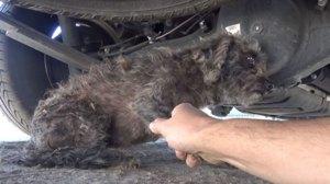 Au vrut să salveze un câine fără stăpân, dar el nu a vrut să plece de la locul său. Când au aflat motivul, au rămas înmărmuriţi