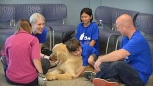 Un băieţel autist CARE NU POATE FI ATINS DE NIMENI a aşteptat timp de 2 ani un câine. Imaginea întâlnirii dintre cei doi este DEVASTATOARE