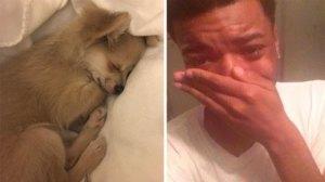 Specialiştii au aflat ce visează câinii, iar stăpânii patrupezilor nu se pot opri din plâns. Nu se aşteptau la asta