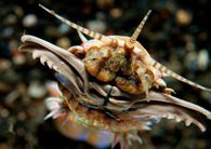 Un vierme uriaș terorizează oceanele! Victimele nu au nicio șansă! VIDEO