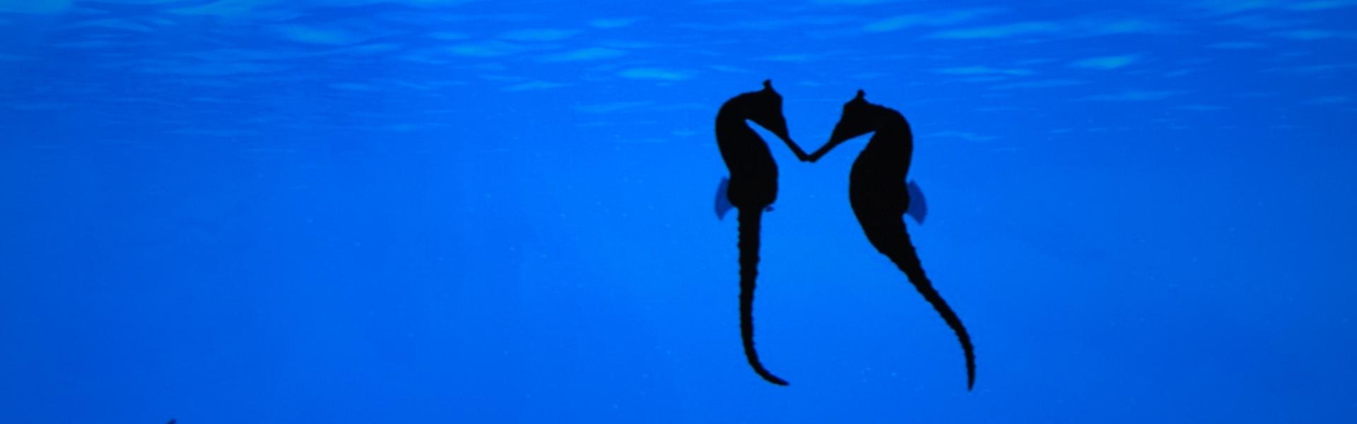 Iubiri fabuloase din lumea necuvântătoarelor: animale care se pricep la relaţii mai bine decât noi