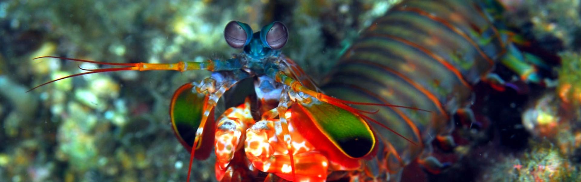 Minunățiile naturii: Animale cu ochi fantastici