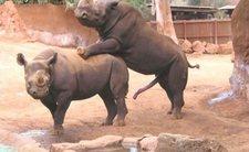 Top 5 animale cu cele mai ciudate... organe genitale!