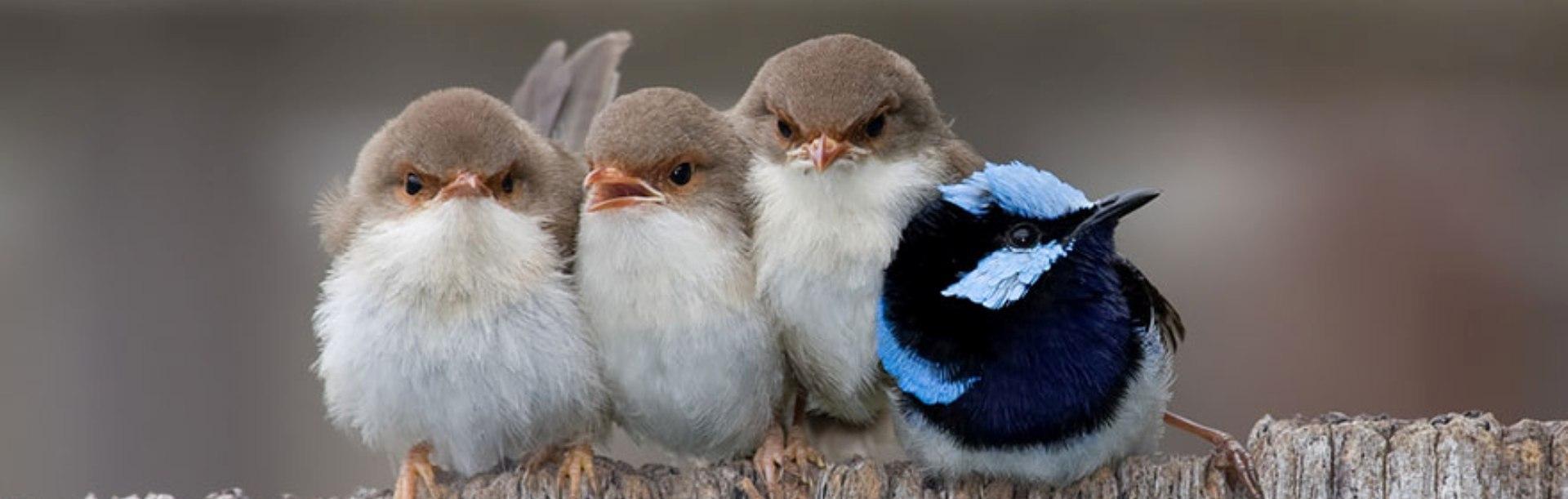 Fotografii superbe – cum se încălzesc păsările când le este frig
