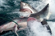 VIDEO-ul momentului pe net! Pescarii sunt șocaţi, au rămas fără…