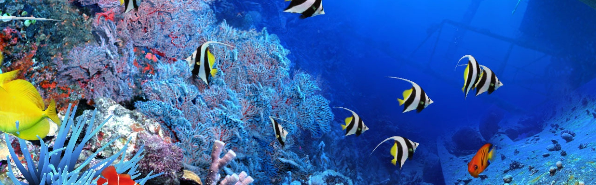 Reguli generale de curățare a acvariului