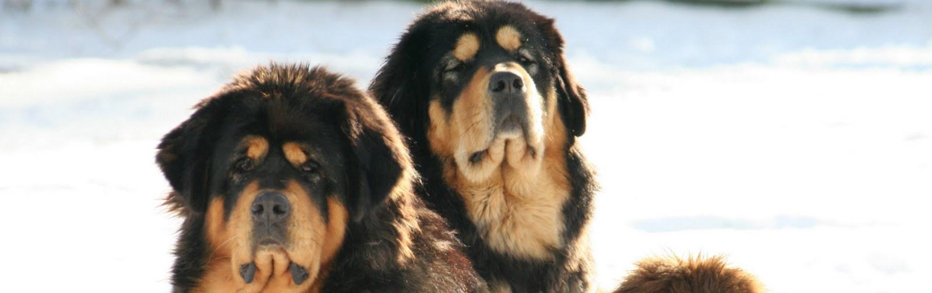 10 rase exotice de câini pe care toată lumea şi le doreşte