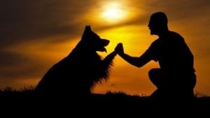 15 moduri prin care căţelul tău îţi spune că te iubeşte