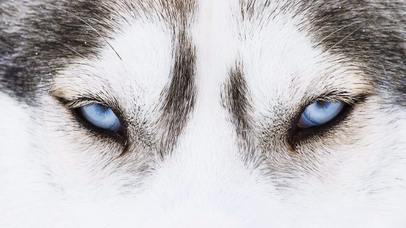 Lumea Prin Ochii Unui Căţel Cum Funcţionează Vederea