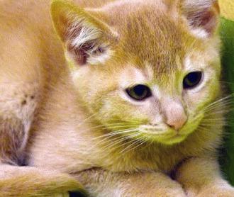 tratament raie la pisica nikvorm catena