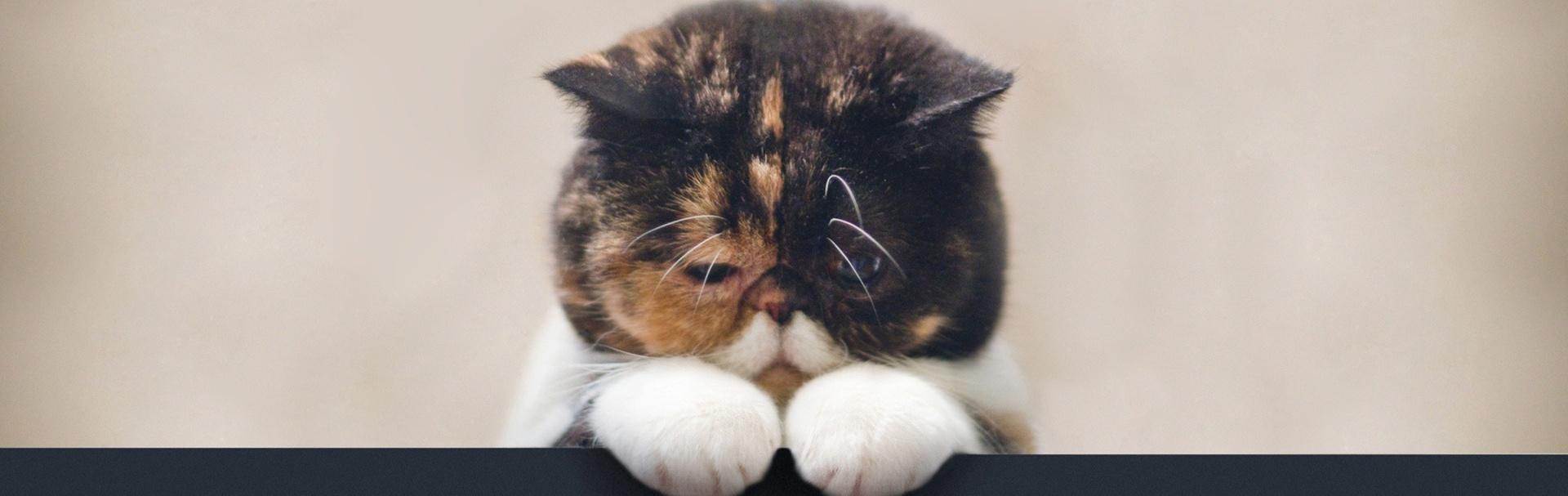 Cum îngrijim pisica după o intervenţie chirurgicală?