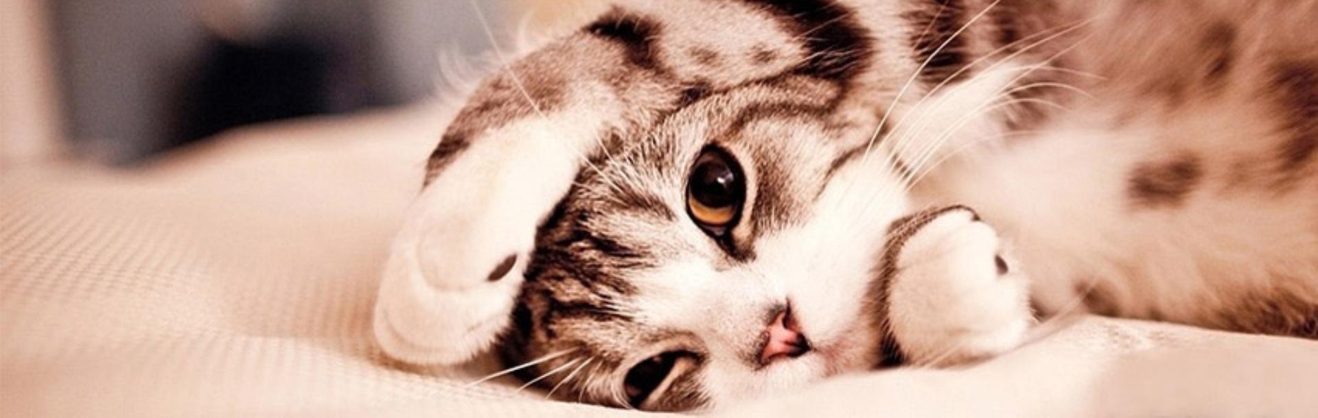 Epilepsia la pisici – simptome, cauze şi tratament