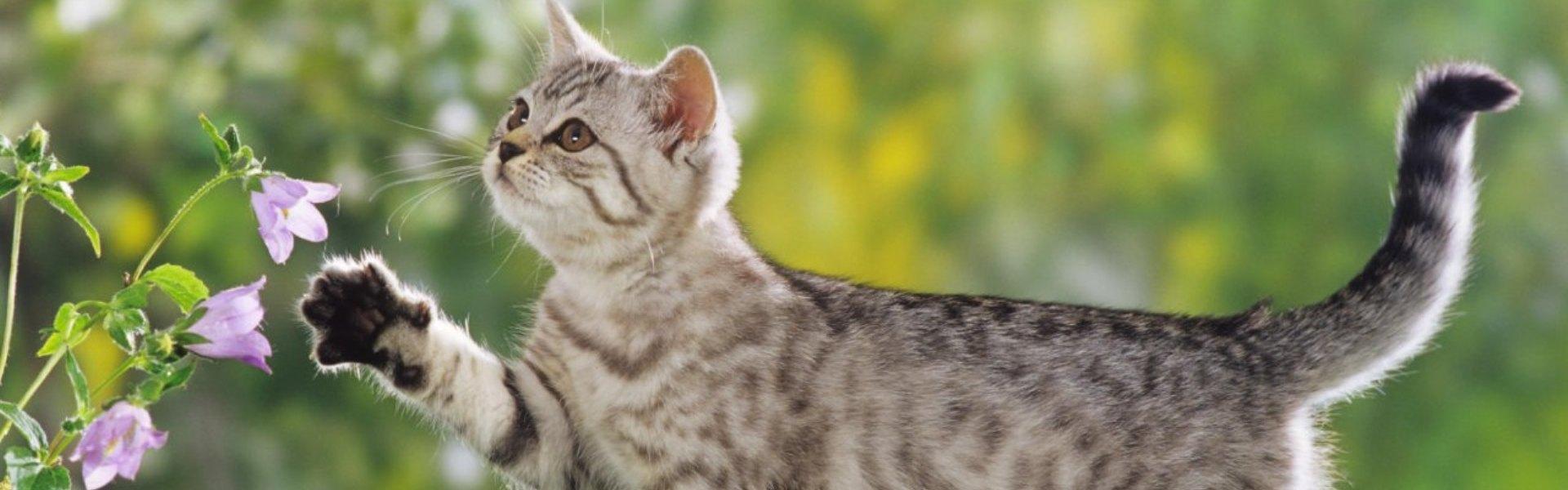Ruperea cozii la pisici