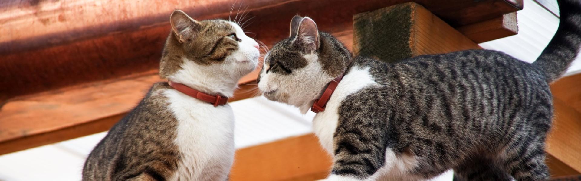 Motan sau pisică? Diferențele de personalitate între cele două sexe