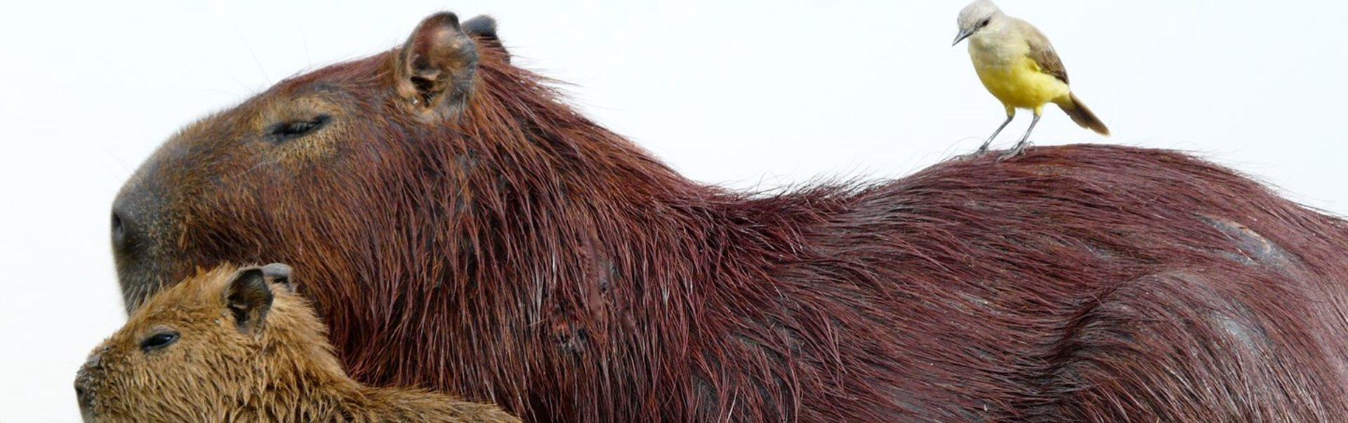 5 lucruri despre animale, pe care nu ţi-ai fi dorit să le ştii