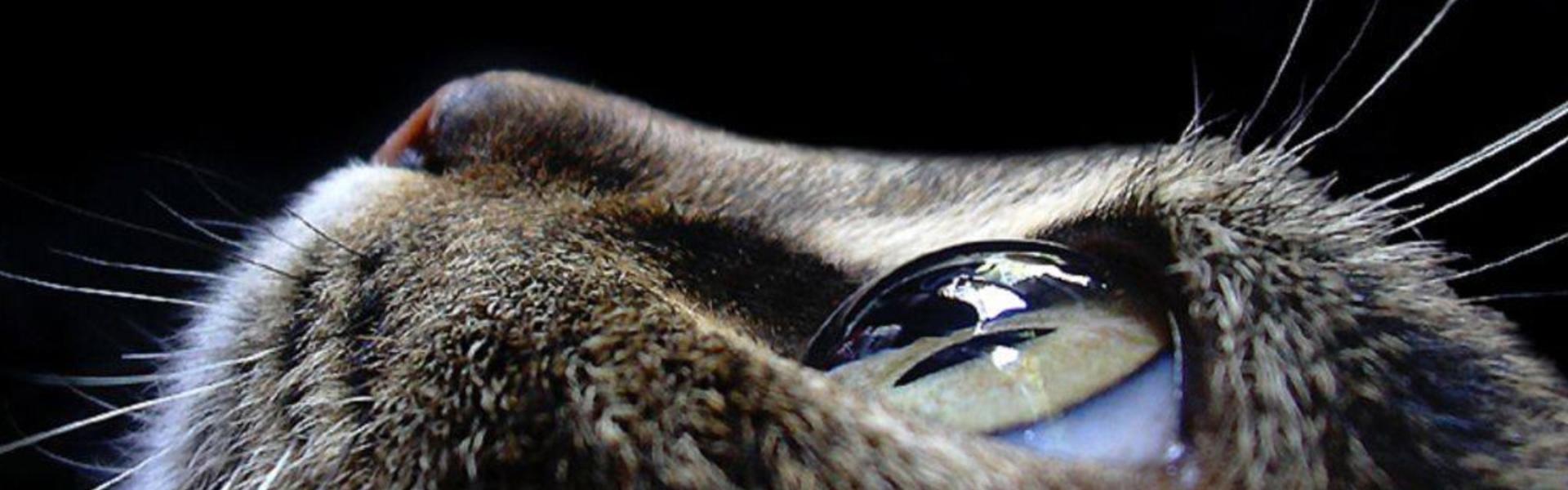 Cum văd animalele lumea? VIDEO