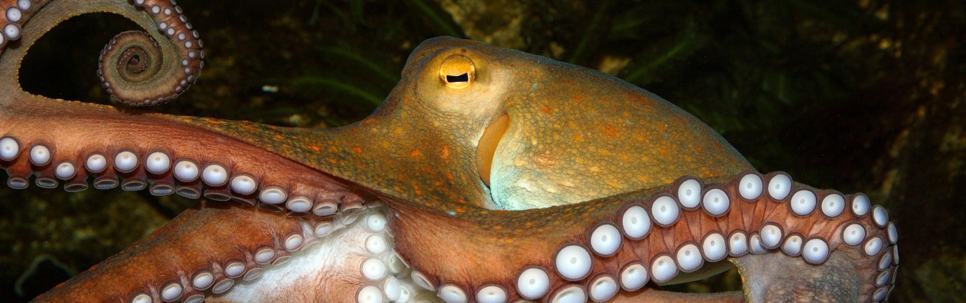 Curiozităţi despre ochii animalelor – Cele mai surprinzătoare fapte – Partea I