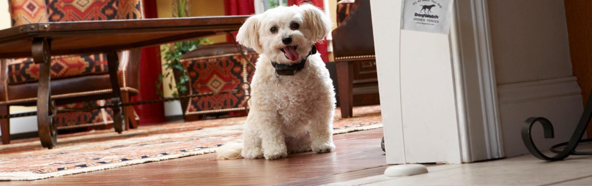 Jocuri de interior pentru câini