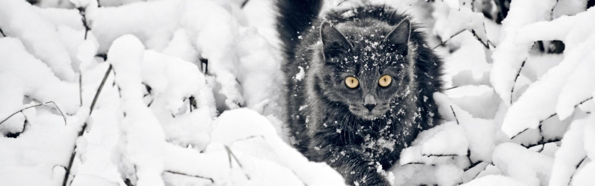 Cum ajutăm o pisică cu hipotermie?