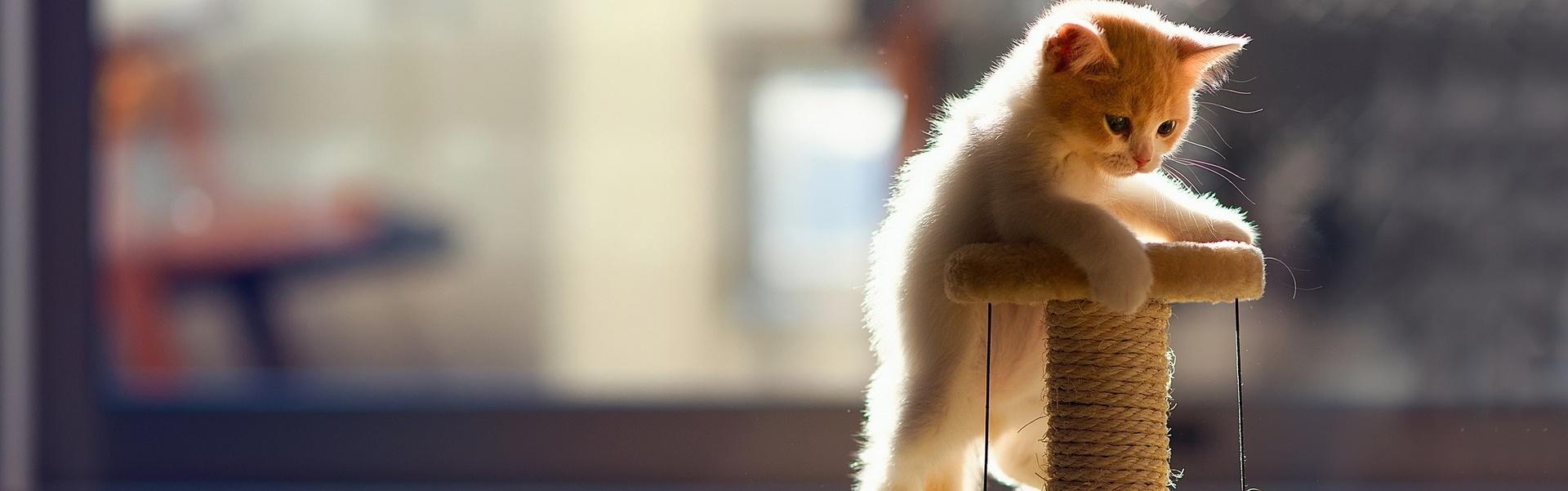 Cum să alegi ansamblul de joacă potrivit pentru pisica ta?