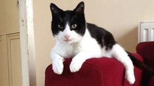 WOW! Cât de tare se aude acest tors de pisică! A intrat în CARTEA RECORDURILOR – VIDEO