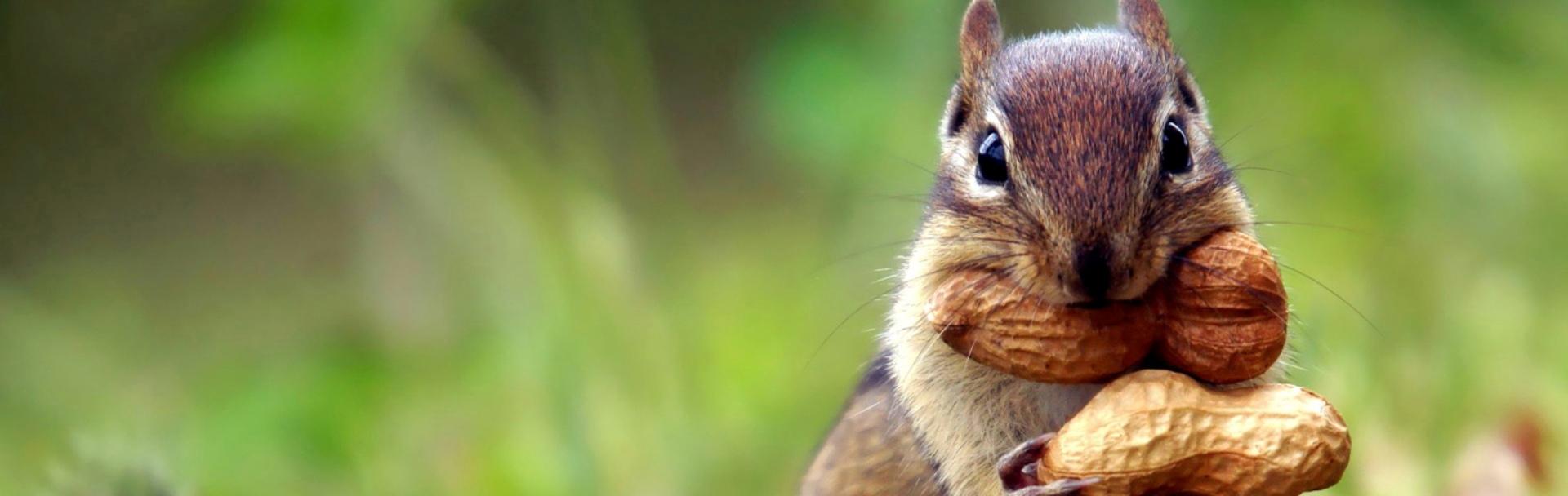10 lucruri interesante despre veveriţe